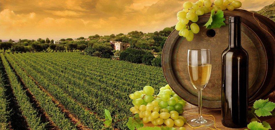 Vineyard-Toscana