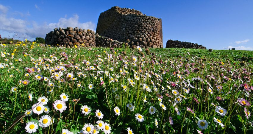"""Flowers near """"Nuraghe Losa"""" in Sardinia, Italy    """